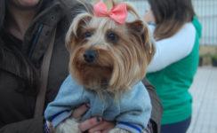 Bendición de mascotas por la Festividad de San Antonio Abad