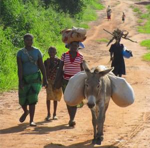mozambique-80752_640