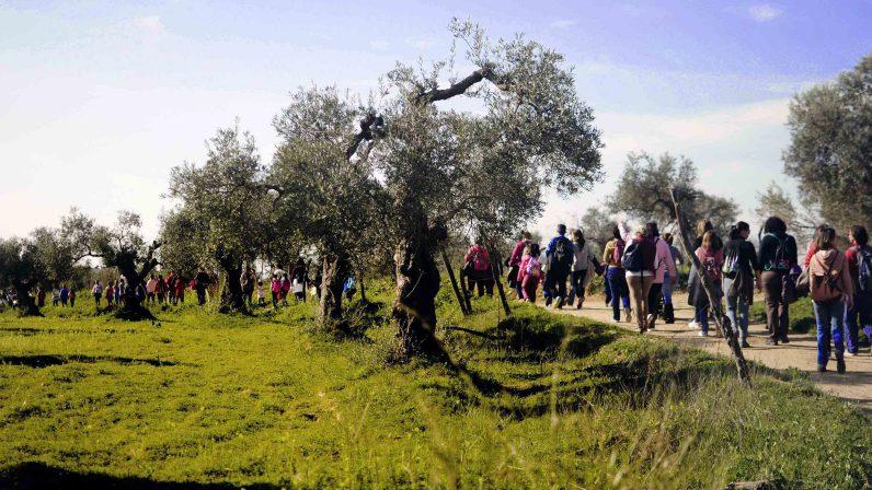 """""""PONEOS EN CAMINO"""", Carta del Arzobispo de Sevilla para orientar el curso pastoral 2016-2017"""