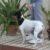Bendición de animales por San Antonio Abad