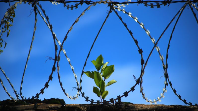 Reportaje sobre la Pastoral Penitenciaria en el Hospital Psiquiátrico Penitenciario: Humanizando el día a día de los enfermos privados de libertad
