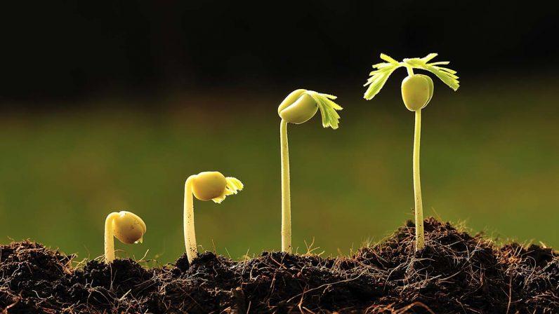 La sabiduría de sembrador