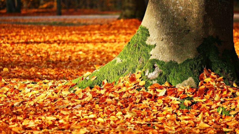 Iniciamos el otoño y el amor supera la dificultad