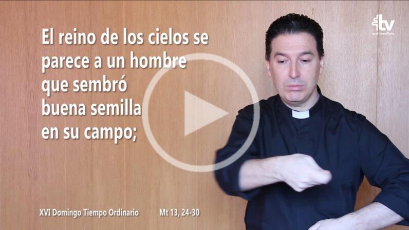 Evangelio del XVI Domingo de Tiempo Ordinario (ciclo A) en LSE