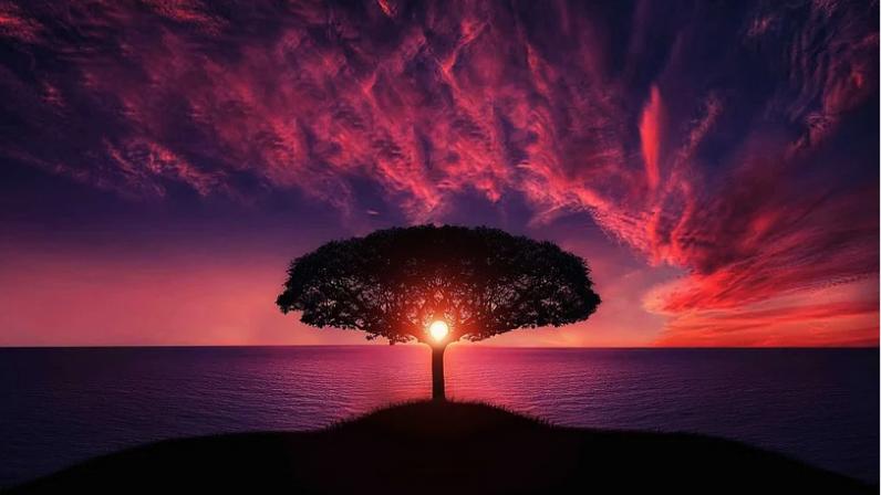 Memoria y amnesia divinas. Un amor que restaura